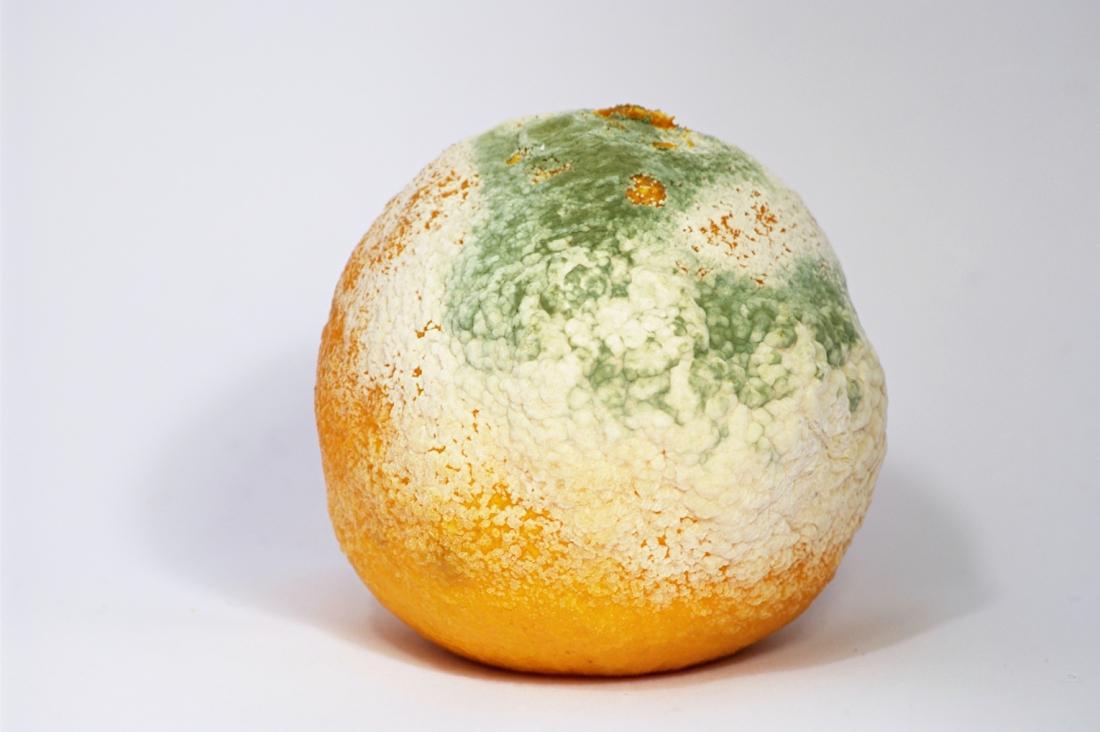 Фото зеленой плесени